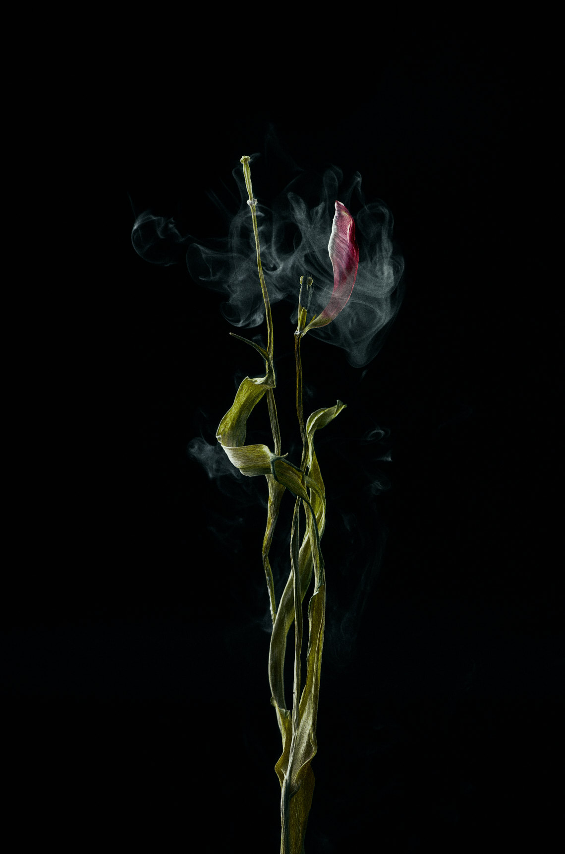 Charlie Sin Photography | Dried Flower 02