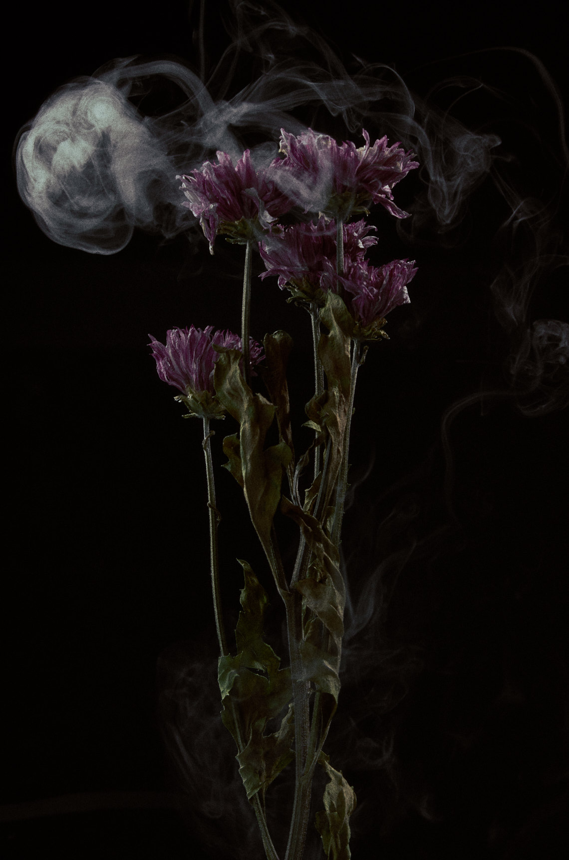 Charlie Sin Photography | Dried Flower 06