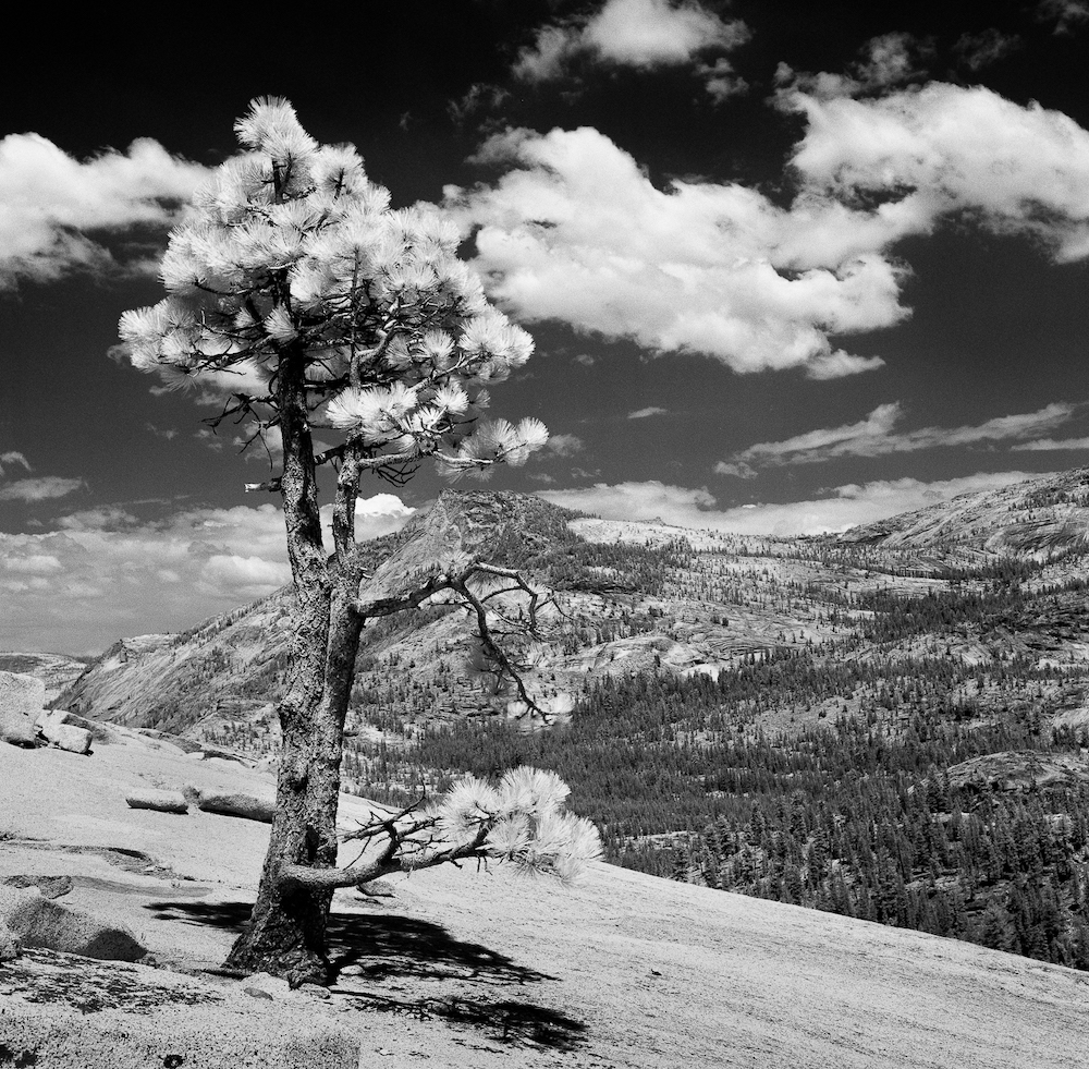 Charlie Sin Photography | Infrared | Yosemite