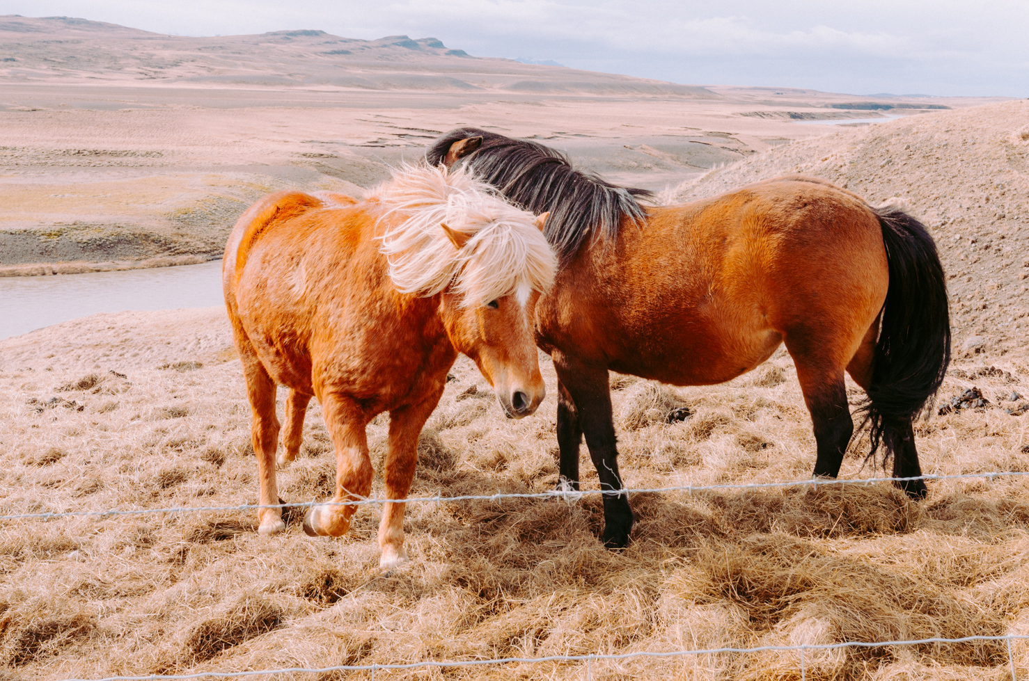 Icelandic Horse - Travel Photographer LA Charlie Sin