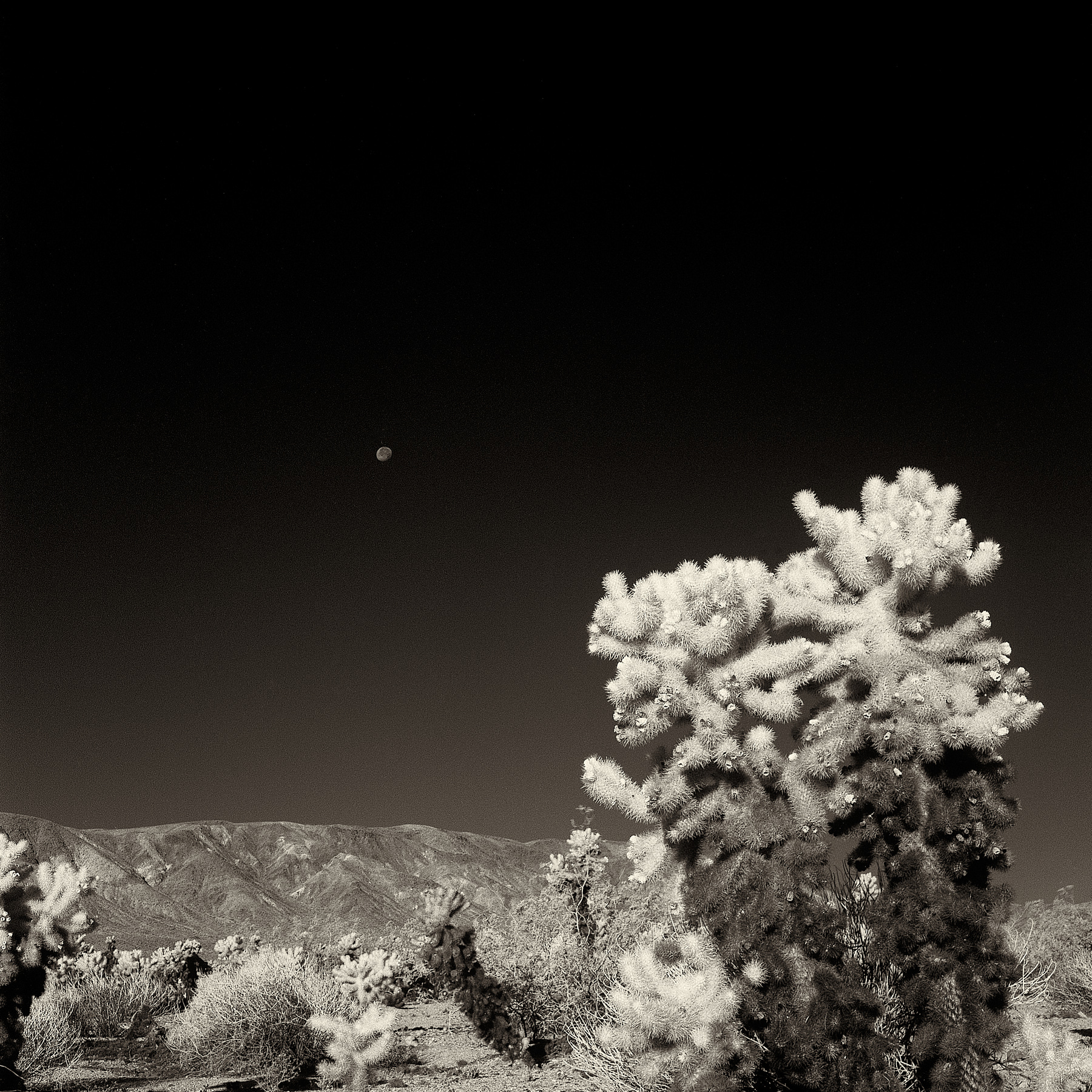 Joshua Tree and a moon_Infrared Landscape Charlie Sin