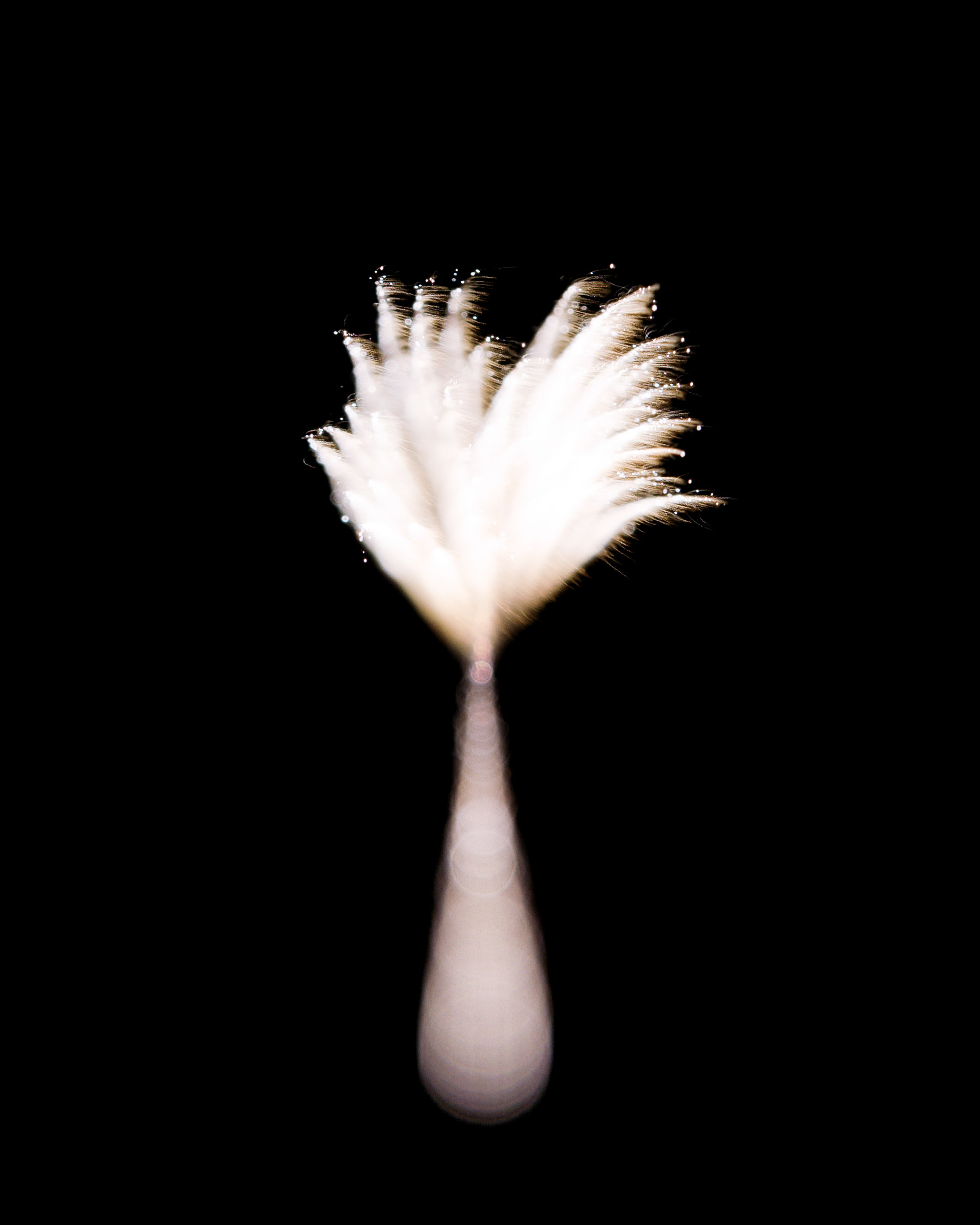 Firework Photo, Night Flower 17, WIRED Magazine