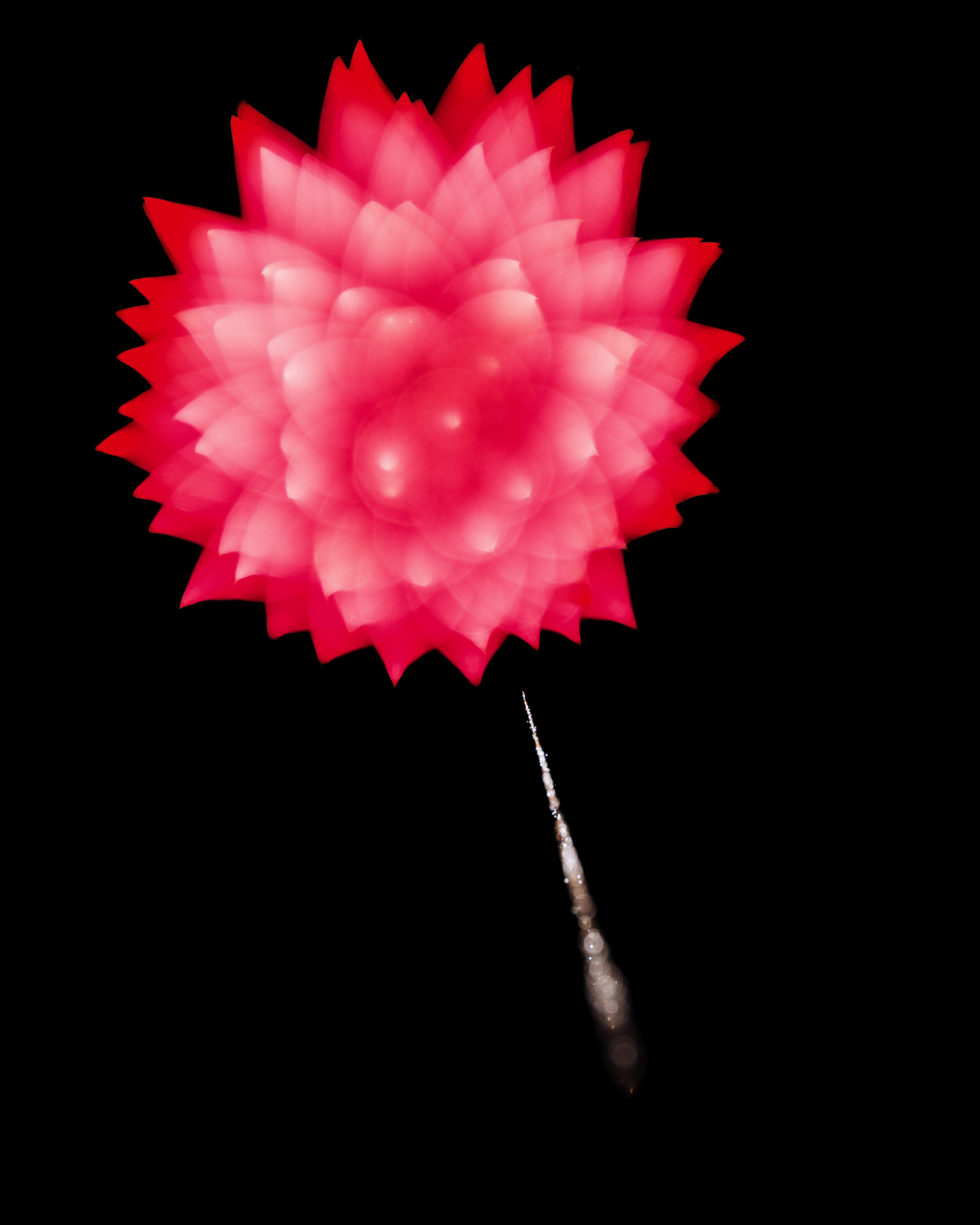 Firework Photo, Night Flower 38, WIRED Magazine